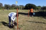 Siembra de 16 plantas pezuña de vaca en barrios de Resistencia, Chaco, Argentina, para la conservación de la especie
