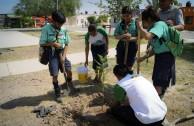 3.556 especies emblemáticas fueron sembradas en México