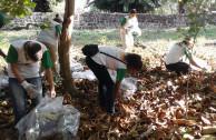 limpiando manglar