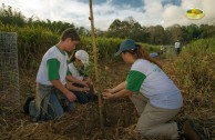 Let us celebrate life with Mother Earth: a day of planting trees in Puerto Rico