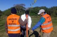 "16 ""pezuña de vaca"" plants are planted in Resistencia, Chaco Argentina, in order to conserve the species"