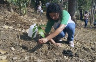 Activists for Peace in Costa Rica planted 50 native trees