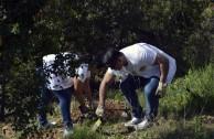 Guardianes por la Paz de la Madre Tierra en España recuperan zona del Parque  Natural de Collserola