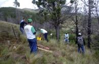 Recuperan importantes zonas de Ecuador con jornadas de reforestación