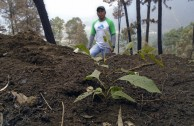 Guatemala obsequia 2.515 árboles a la Tierra en su día