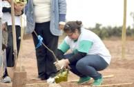"New Trees in the ""Dr. William Soto Forest"" in Villa Los Corralitos"