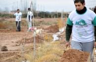 """Nuevos árboles en el """"Bosque Dr. William Soto"""" de Villa Los Corralitos"""