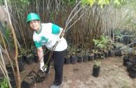 Activistas por la Paz siembran miles de árboles en la provincia de Mendoza