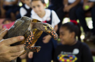 En Puerto Rico: Acciones por la conservación de la vida silvestre