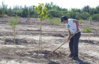 Actions for the conservation of vegetable species