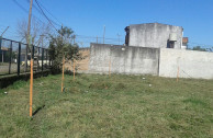 Ambiente verde