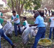 limpiar bosque manglar